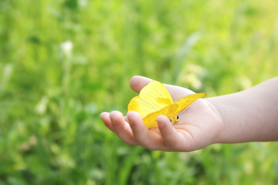 Child holding a butterfly in its hand